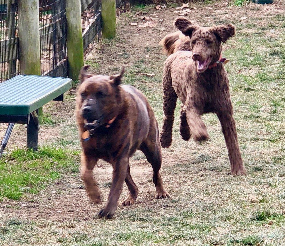 Sadie and Ellie 1.jpeg