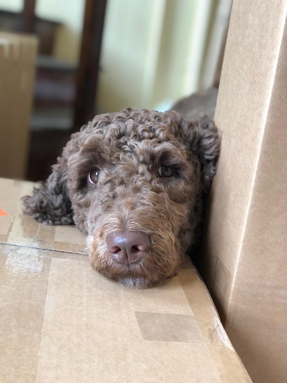 Busy Busy Busy! - Bark! Ellie Speaks