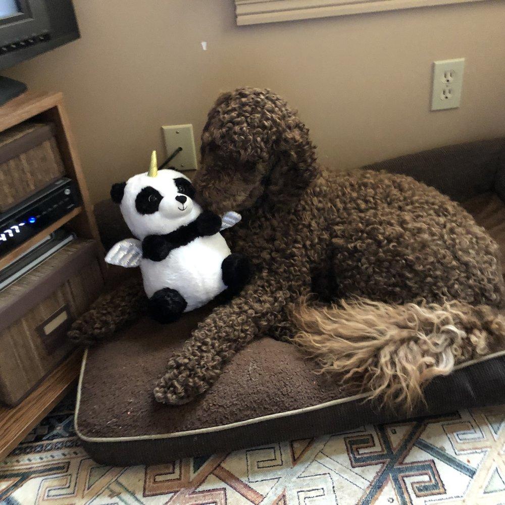 New Toys!! - Bark! Ellie Speaks