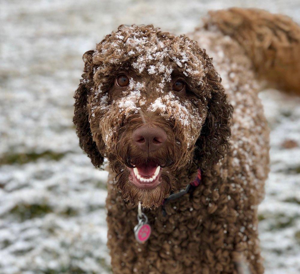 BIG Excitement!!! - Bark! Ellie Speaks