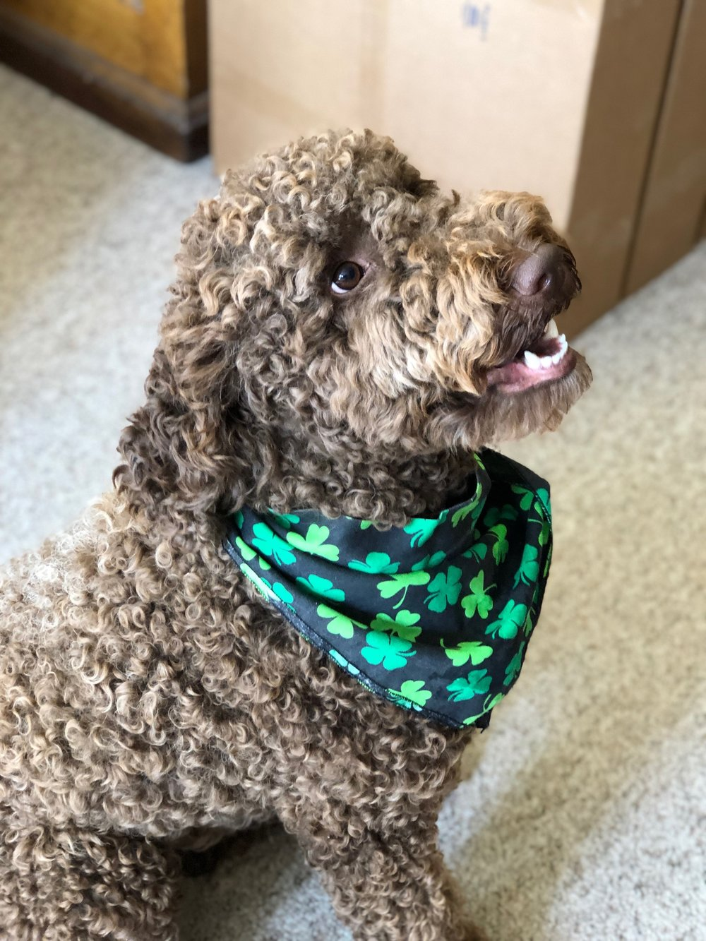 Green Water, Therapy, & Prizes! - Bark! Ellie Speaks