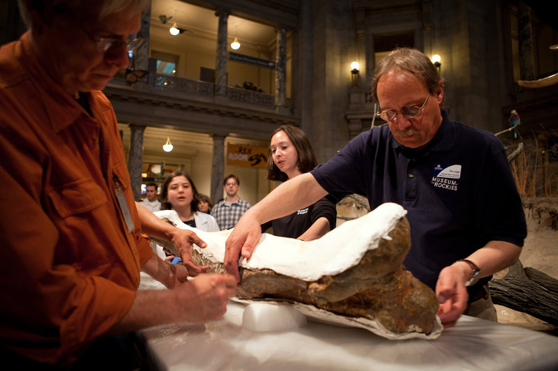 NPR - A T. Rex Treks To Washington For A Shot At Fame