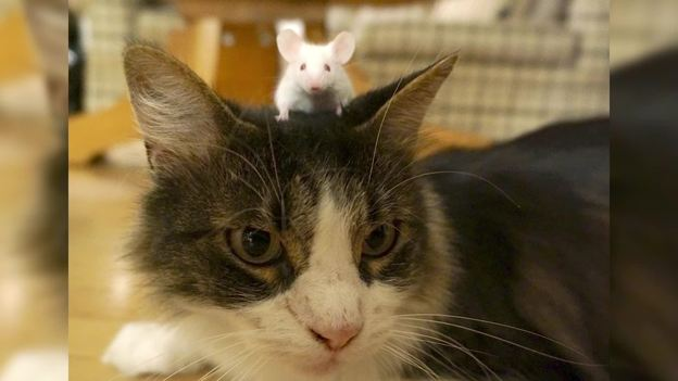 Are These Mice Unafraid of Cats
