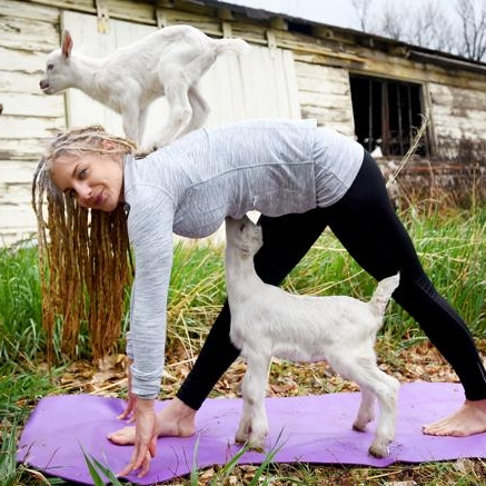 Goat Yoga - USA Today