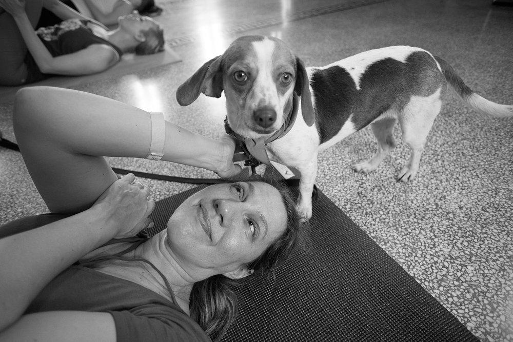 Puppy Yoga 043.jpg