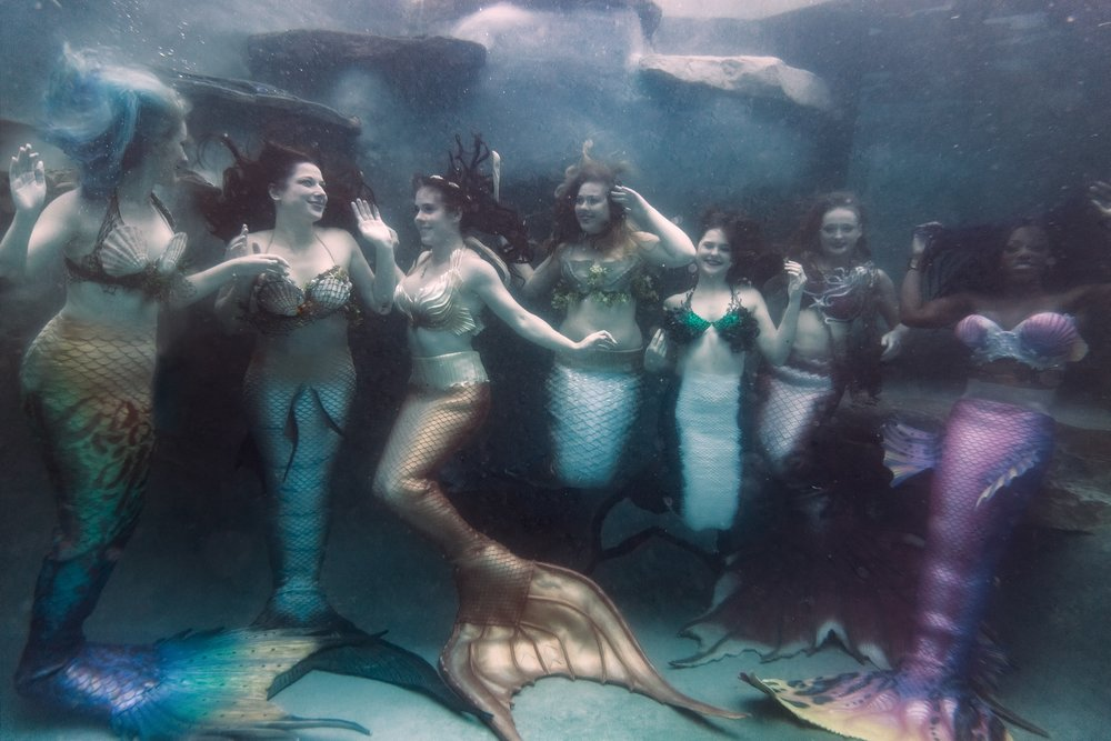 Metro Merfolk are a group of D.C.-area mermaid enthusiasts. They swim together and sometimes meet up to show off their tails on land. (Mike Wysocki/Mike Wysocki)