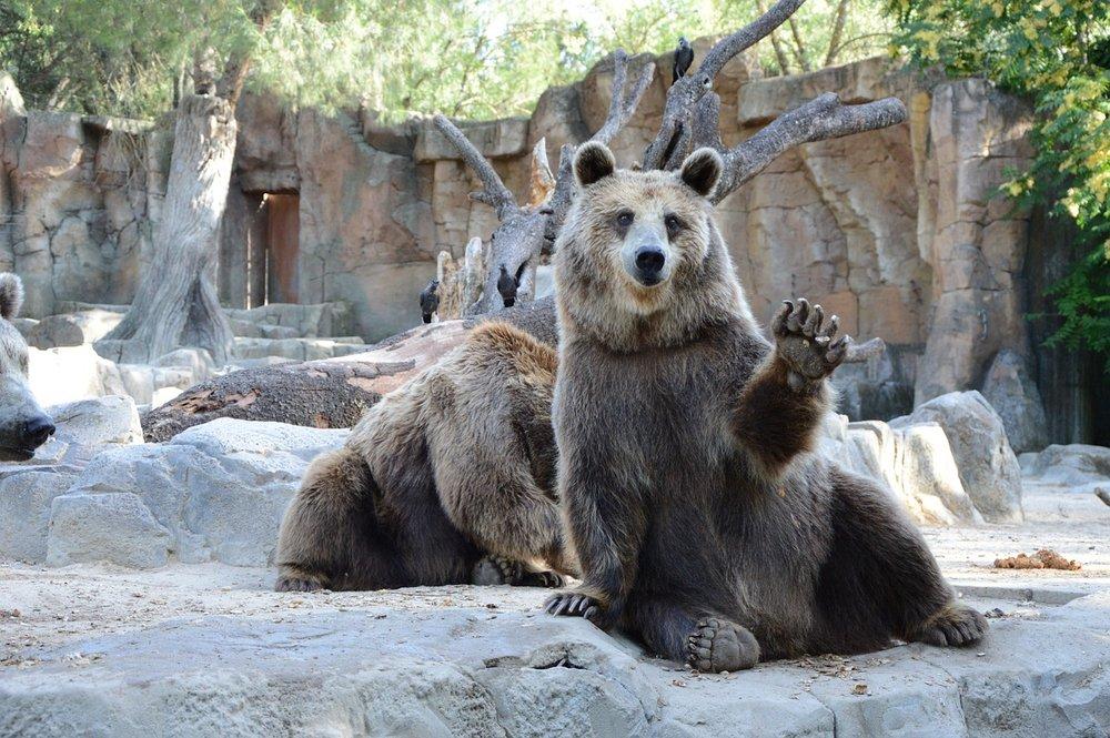 bear-1323389_1280.jpg