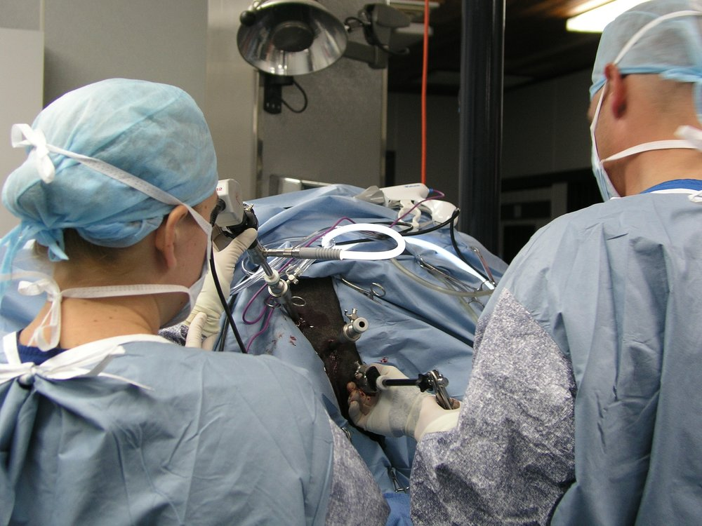 2005-11-02 Laparoscopic Ovx (WIN Johnston) 62.JPG