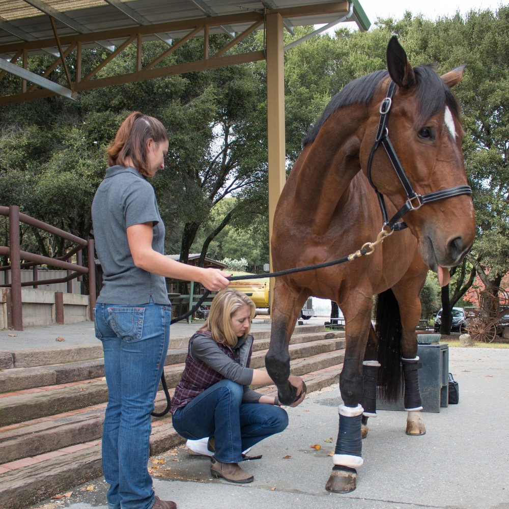 Your Resource for Equine Medicine in Northern California - Northern California Association of Equine Practitioners (NCAEP) provides continuing education and community resources to Equine Practitioners across Northern California. With the generous support of our industry partners, NCAEP brings nationally-recognized lecturers to our members to cover timely topics in Equine Medicine. In addition, NCAEP supports community needs, veterinary education and disaster relief. Membership is open to veterinarians, veterinary technicians and students.