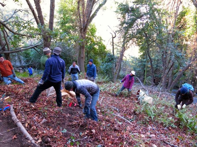 Garber Park Stewards remove invasives to restore native plants in an area of the park called Fern Glen.