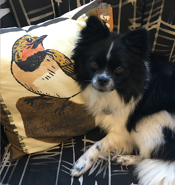 mika and pillow.jpg