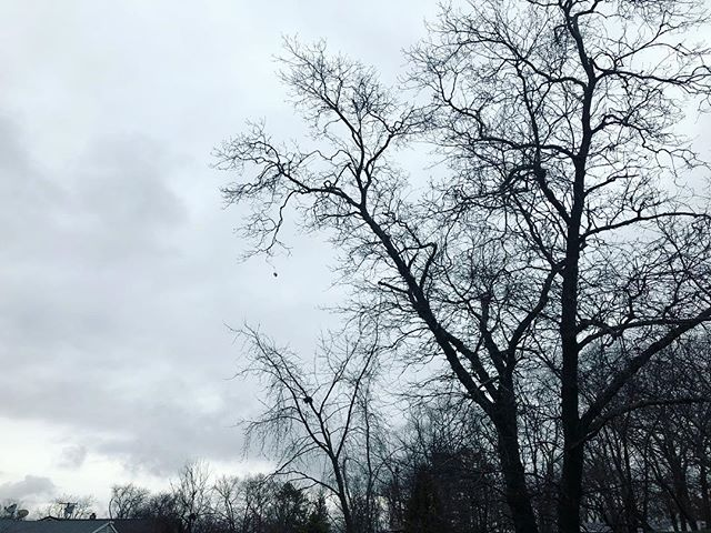 I'm back guys!! ❤️❤️ i missed you very much!! Sadly today is a bit gloomy out. I hope you're having a great day! ❤️ #photographers #photos #photography #sky #scary #nature #naturephotography #photoshoot #photo #photooftheday #filmphotography #blackandwhitephoto #2018