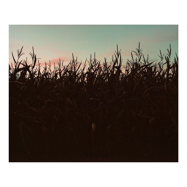 corn // shot on Kodak Portra 400 with a Mamiya RB67⠀ #mediumformat2019⠀ •⠀ •⠀ •⠀ •⠀ •⠀ #sunset #country #rural #ruralphotography #nature #naturephotography #pink skies #mediumformat #portra400 #kodakfilm #mamiya #analoguephotography #buyfilmnotmegapixels #analogvibes #analog #shotonfilm #grainisgood #photofilmy #legacyshooters #boxspeedfeature #120love