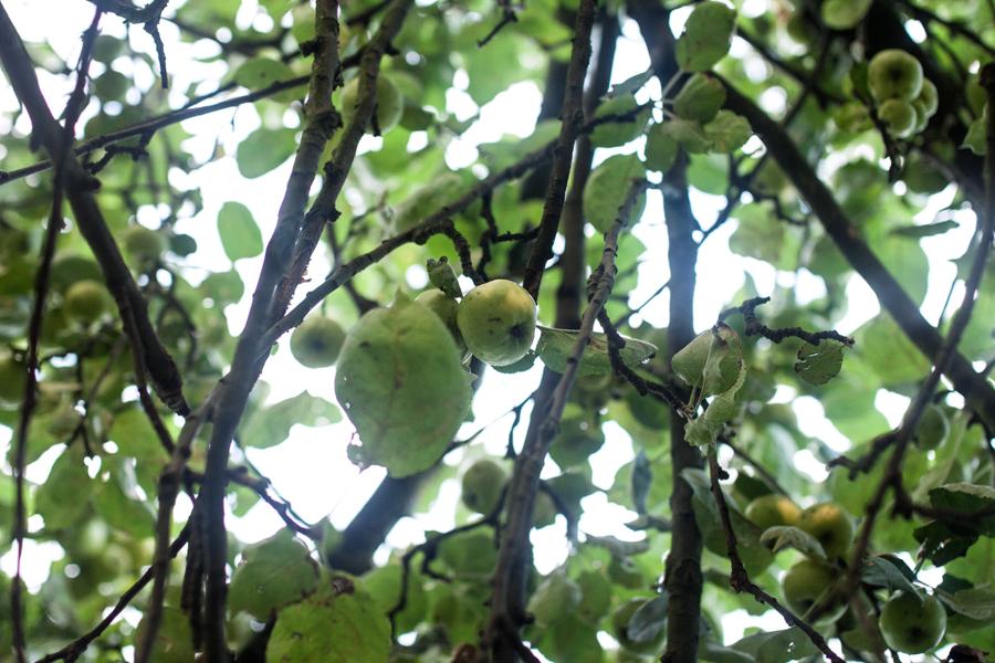 apple-chutney-recipe