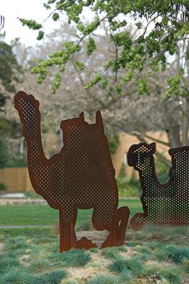 Burke & Wills Camels