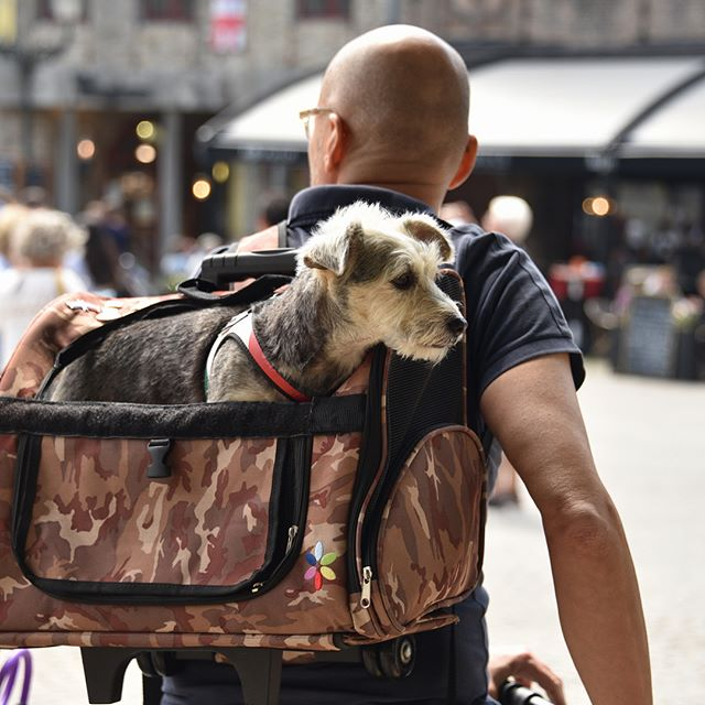 Saw this adorable pet carrier on our biking adventure through Europe! It's great to see how biking is incorporated into everyone's daily life - they even have public charging stations set up for e-bikes! #bikelife #ebike #electricbike #netherlands #petcarrier #mansbestfriend