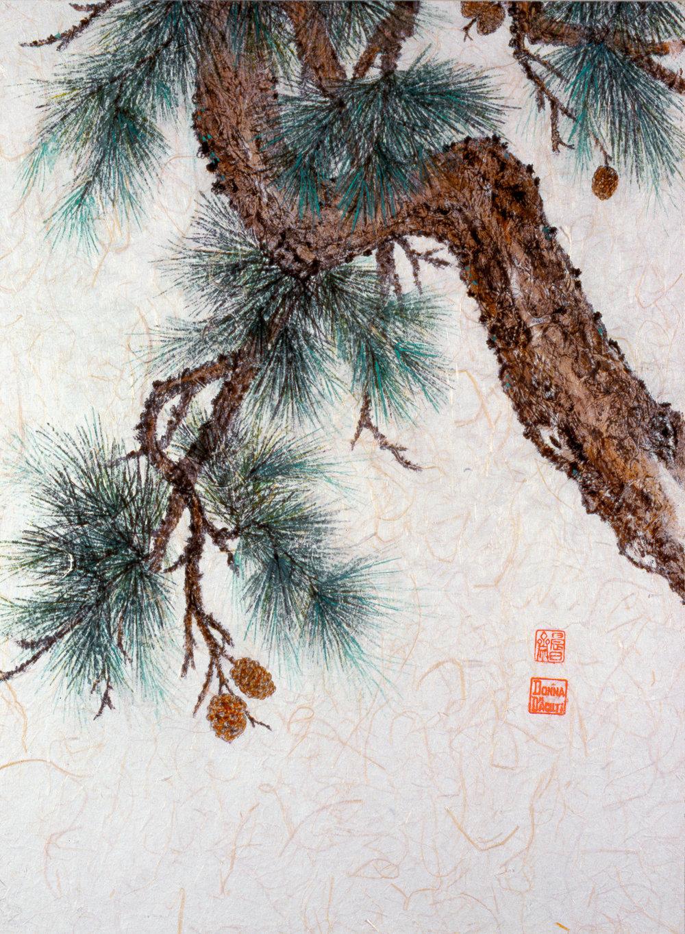 Pine & Cones