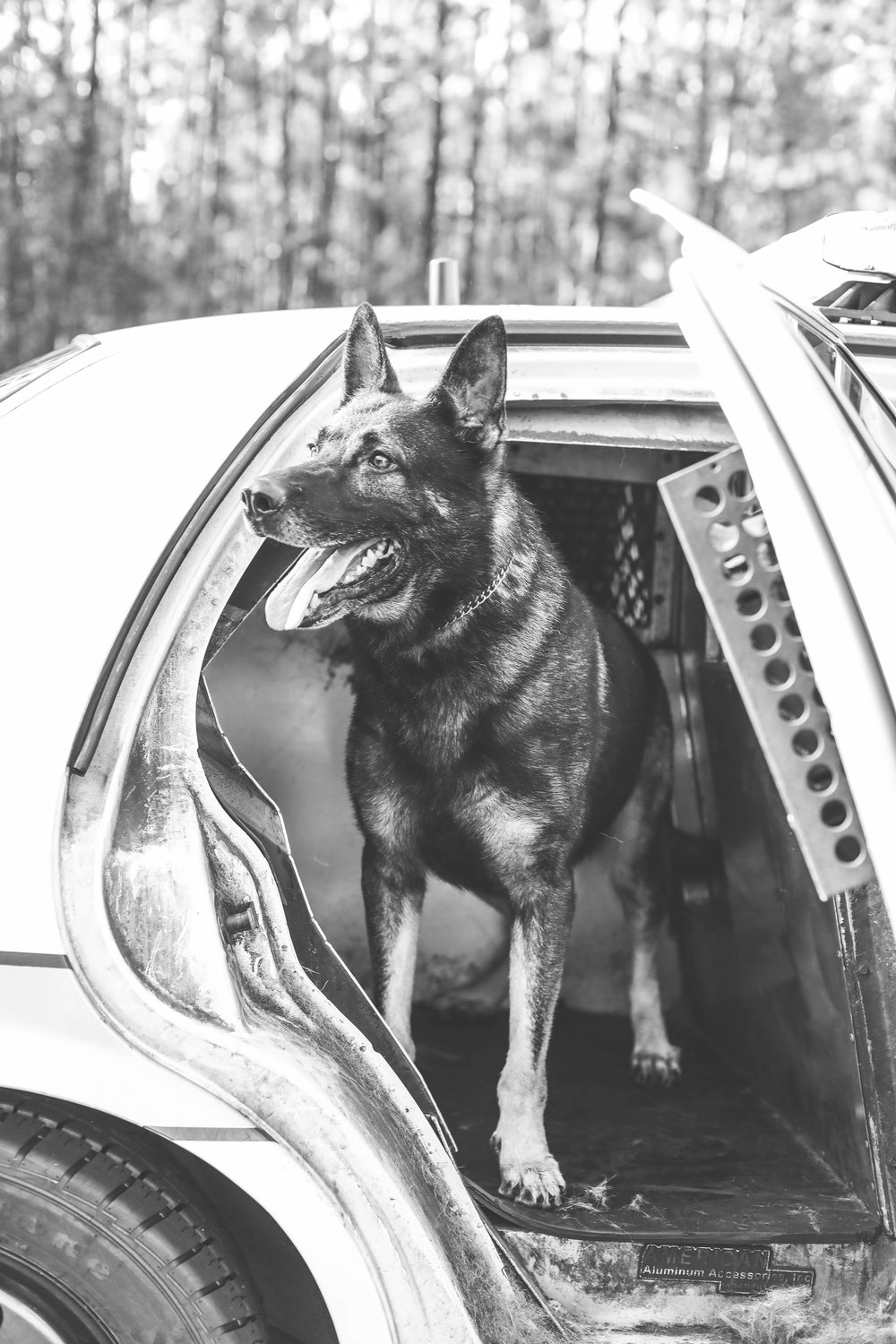 Glynn County Police Department K9 Unit Grey Police Dog