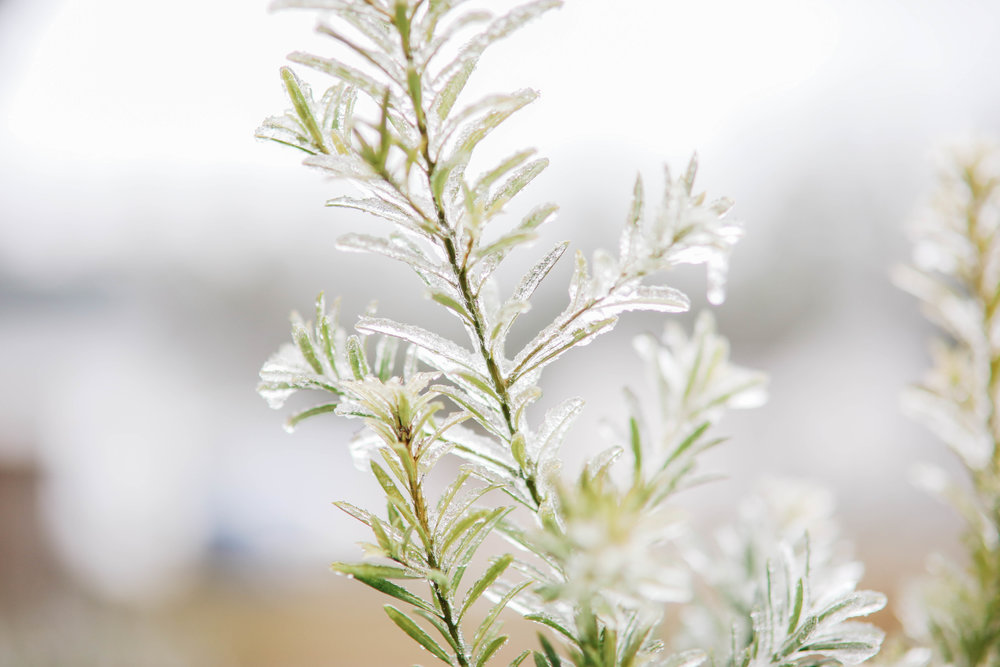 A bush is covered in ice and snow
