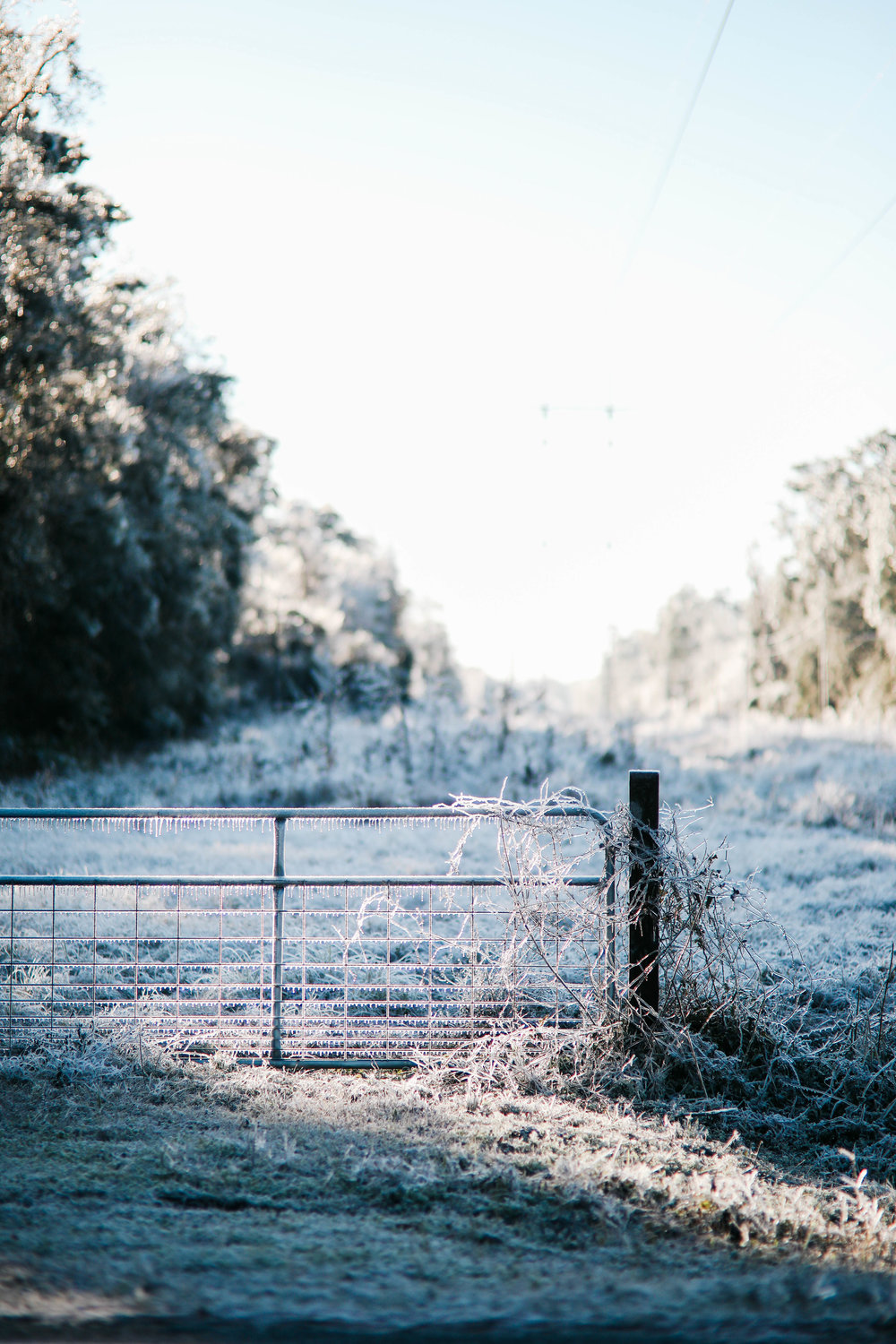 A fence is draped with ice and grass is covered in snow