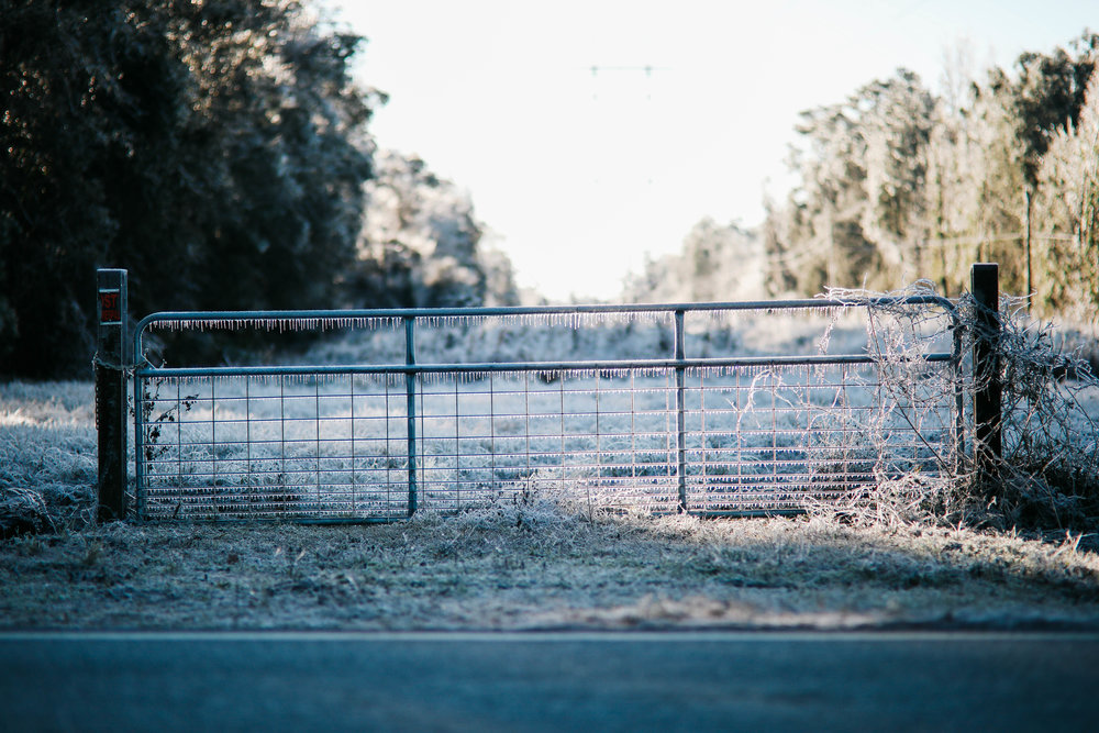 A fence beside the road is draped in icicles