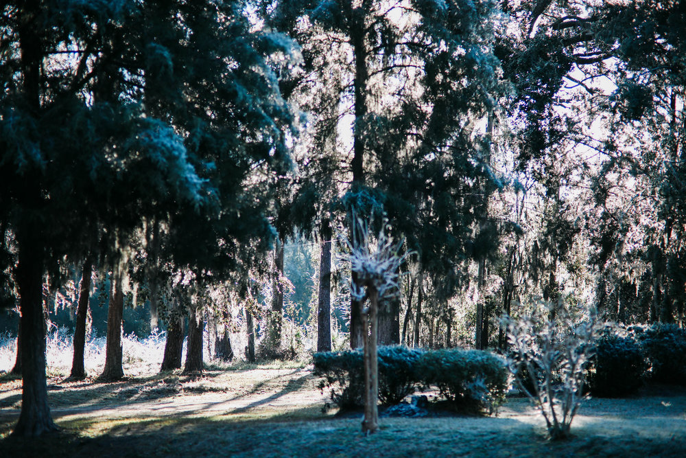 A yard with trees is covered in icicles as the morning sun comes through