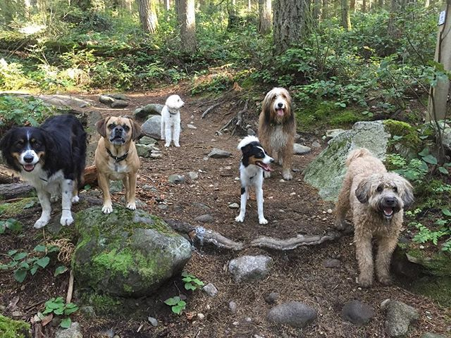 Happiness is hanging with your buddies in our dreamy forest just after a good rain :-) #HikinHoundsAdventures