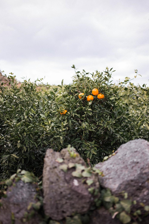affecionada, Jeju Island, photo travel diary, oranges
