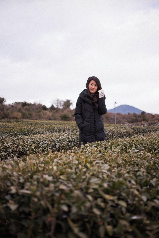 affecionada, Jeju Island, photo travel diary, Osulloc Tea Museum, green tea