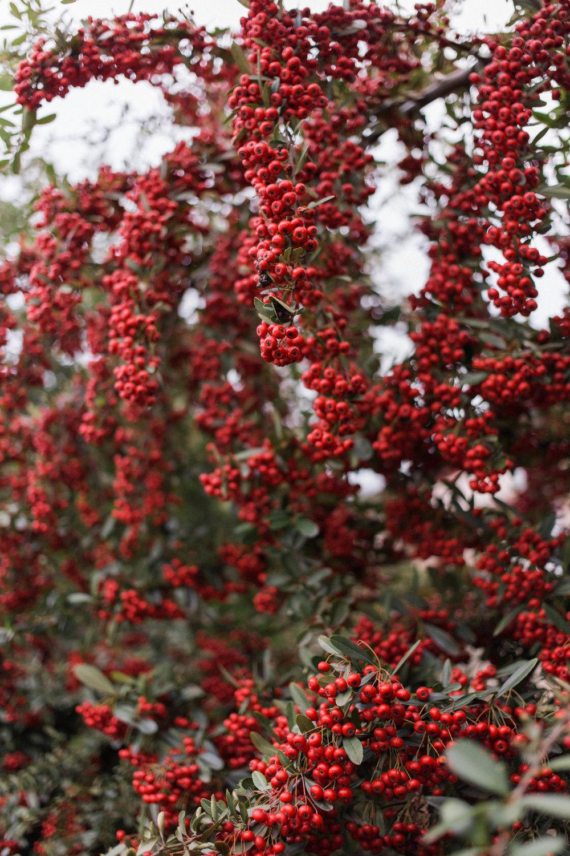 affecionada, Jeju Island, photo travel diary, berries