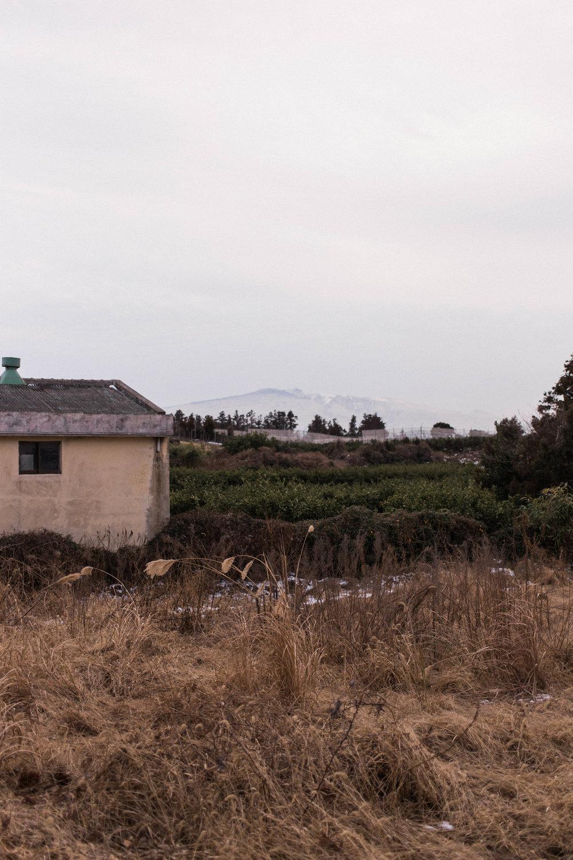 affecionada, Jeju Island, photo travel diary