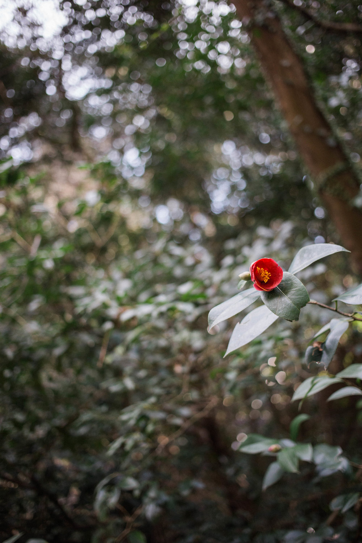 affecionada, Jeju Island, photo travel diary, flower