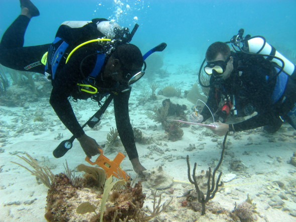 Local and foreign scientists collaborating on conch research. (Photo courtesy Waitt Institute)