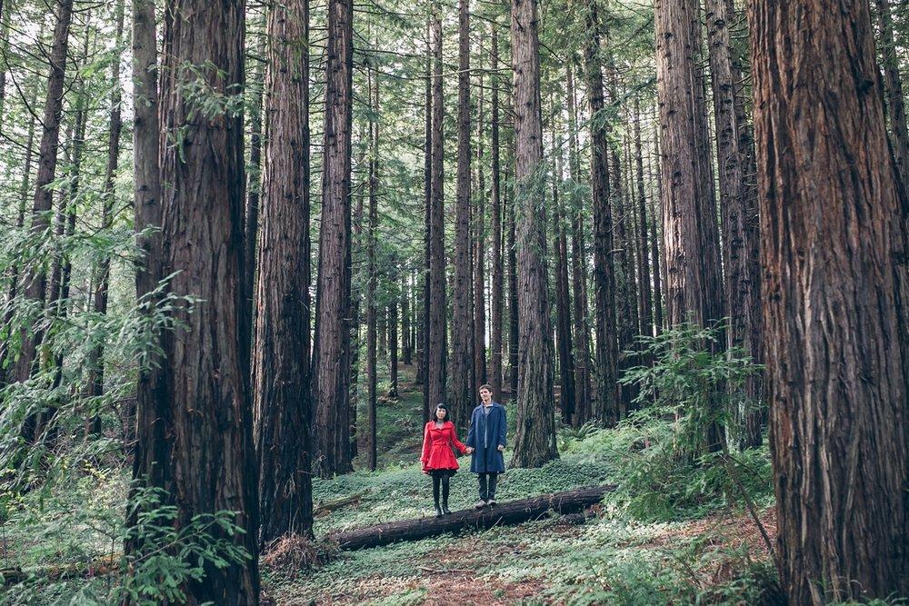 UC-Berkeley-Botanical-Garden-Redwood-Grove_0002.jpg