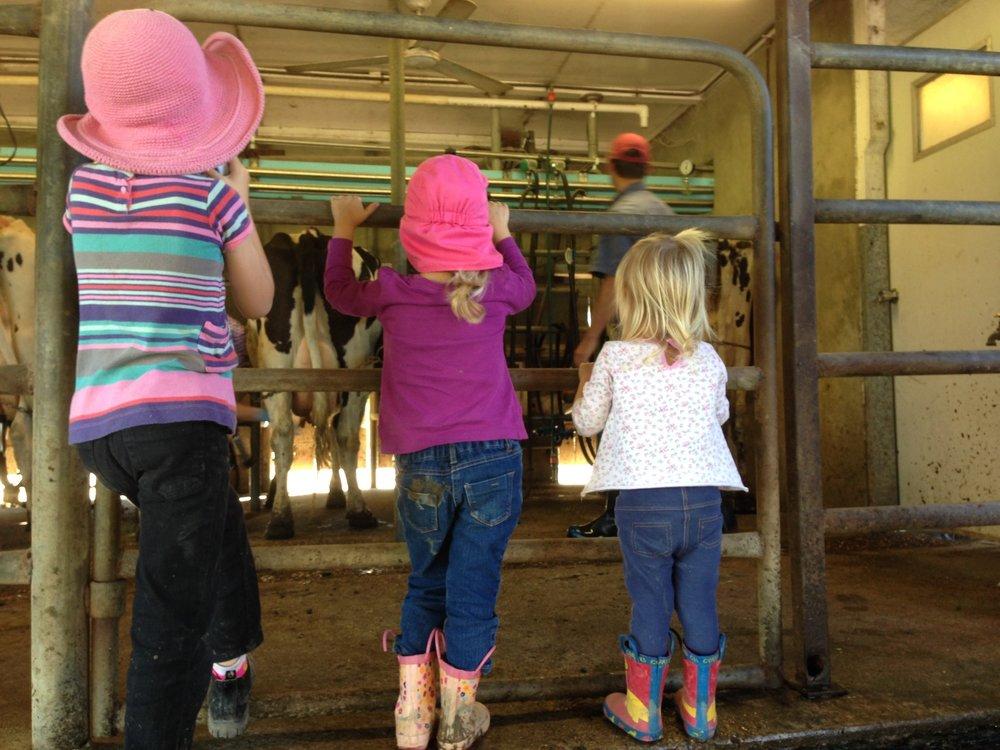 3 litle girls in dairy 2164 web.jpg