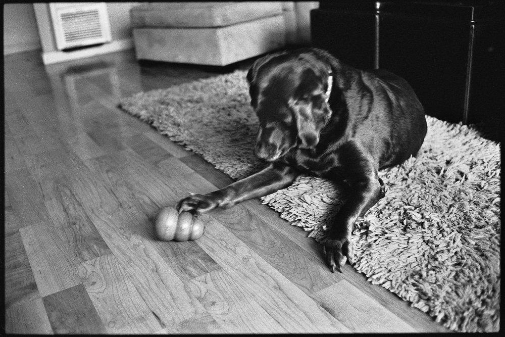 a_dogs_life-5.jpg