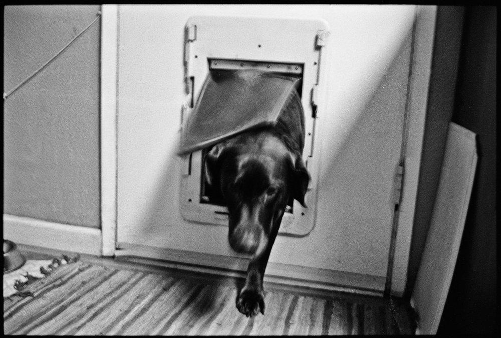 a_dogs_life-8.jpg