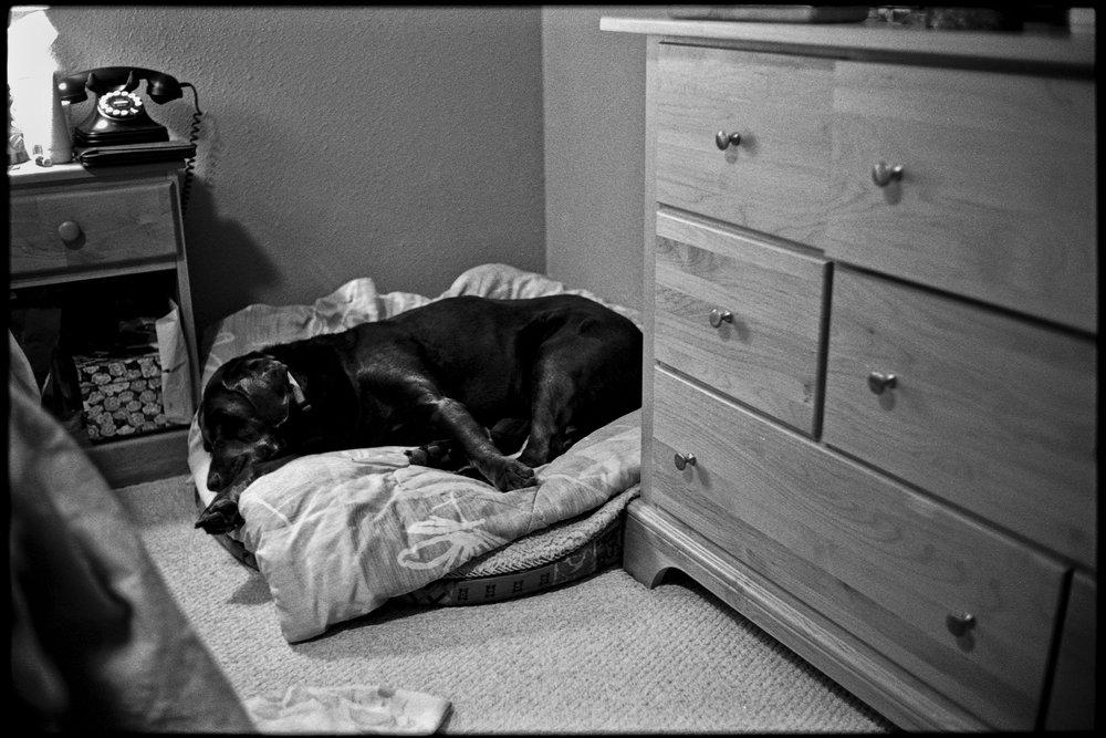 a_dogs_life-12.jpg