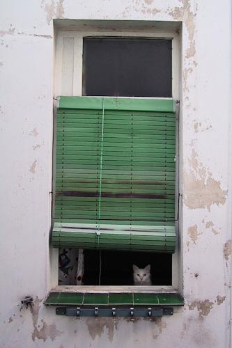 Ventana Con Gato