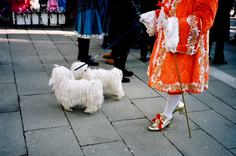 Photograph of a man with two small dogs in Venice, Italy during Carnival