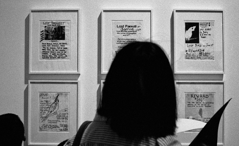 Viewing Found Lost Bird Posters 1989-98 by Rigo 98 now called Rigo 23 at the SFMOMA