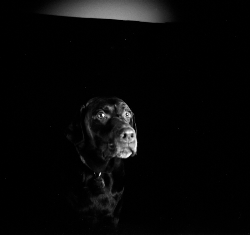 Photograph of a dog taken with a Holga