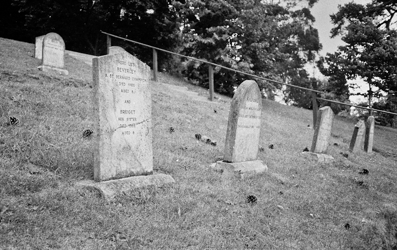 Photograph of a Pet Cemetery in the Powerscourt Estate Enniskerry Ireland