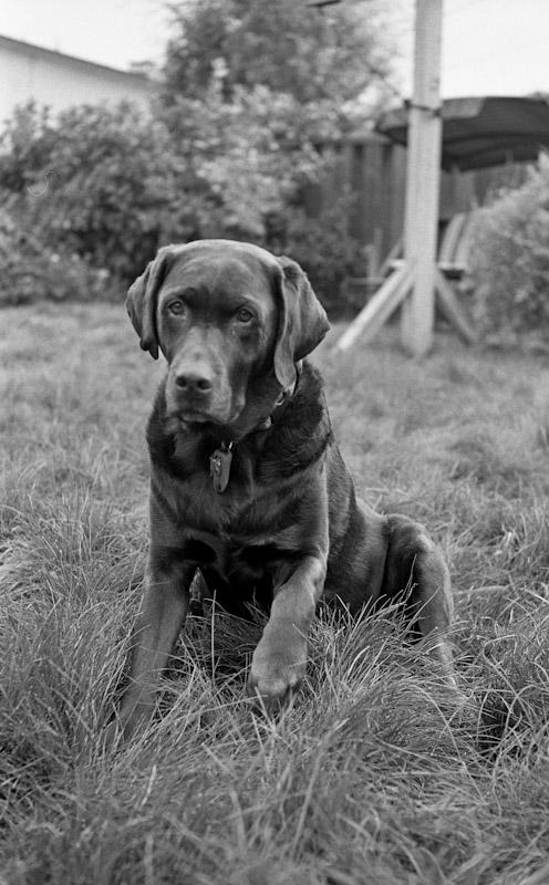Leica M2 Test Shot