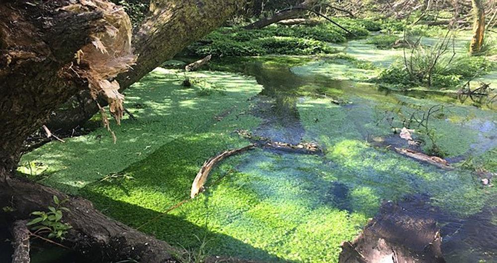 Algae water.jpg