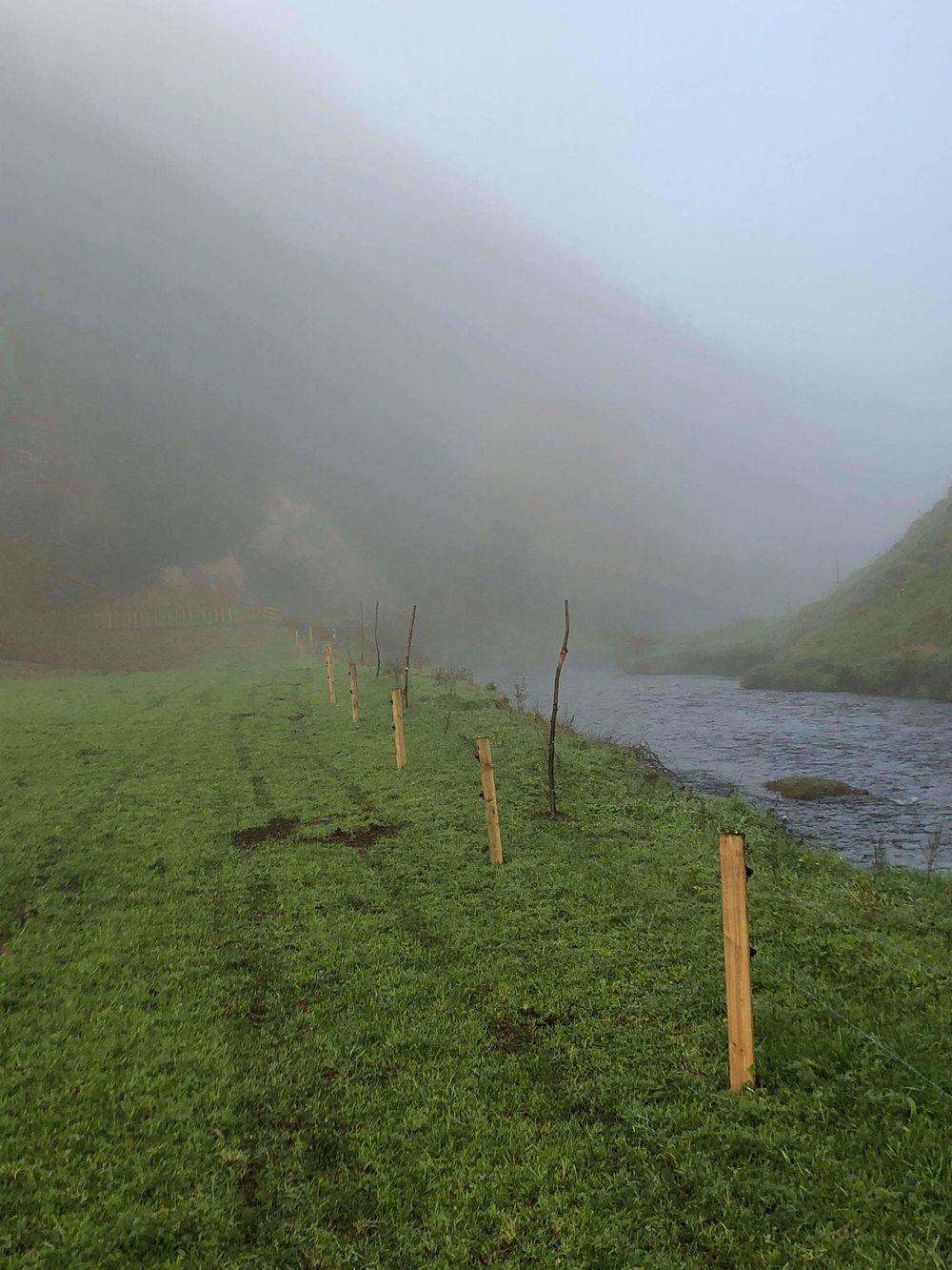 Image shows willow pole planting for erosion management by Waikato Regional Council