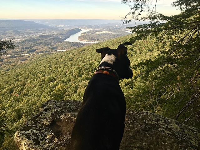 Look, Tansy. Everything the light touches is @happyhoundpetsitting's new service area. We are so pumped to be working in #chattanooga!!!!