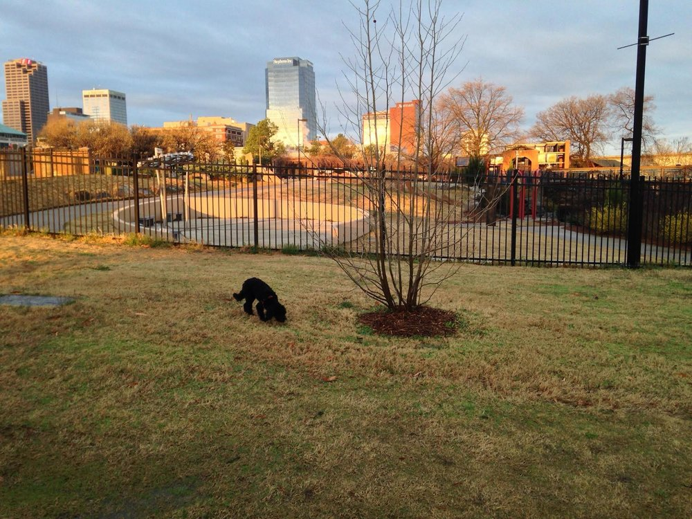 Miku exploring the newly created Riverfront Park in downtown Little Rock, Arkansas, our new location in the US.