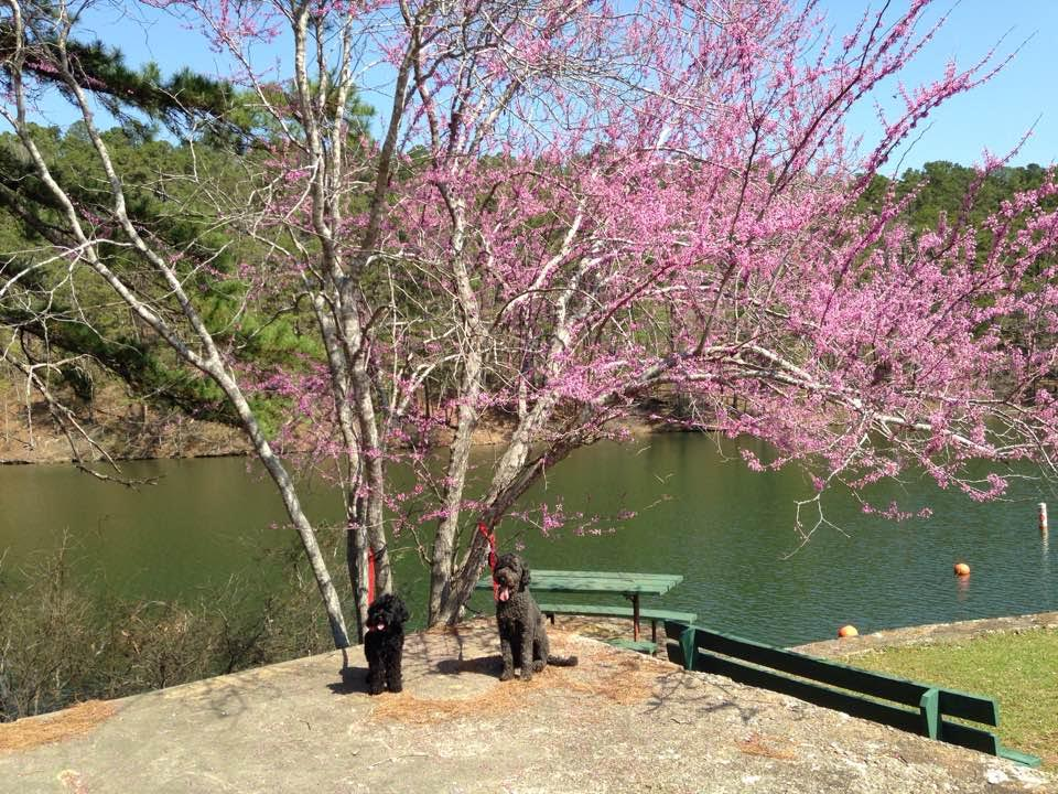 Miku and her older brother Spanky checking out the spring flowers last weekend at Lake Catherine State Park near Little Rock.