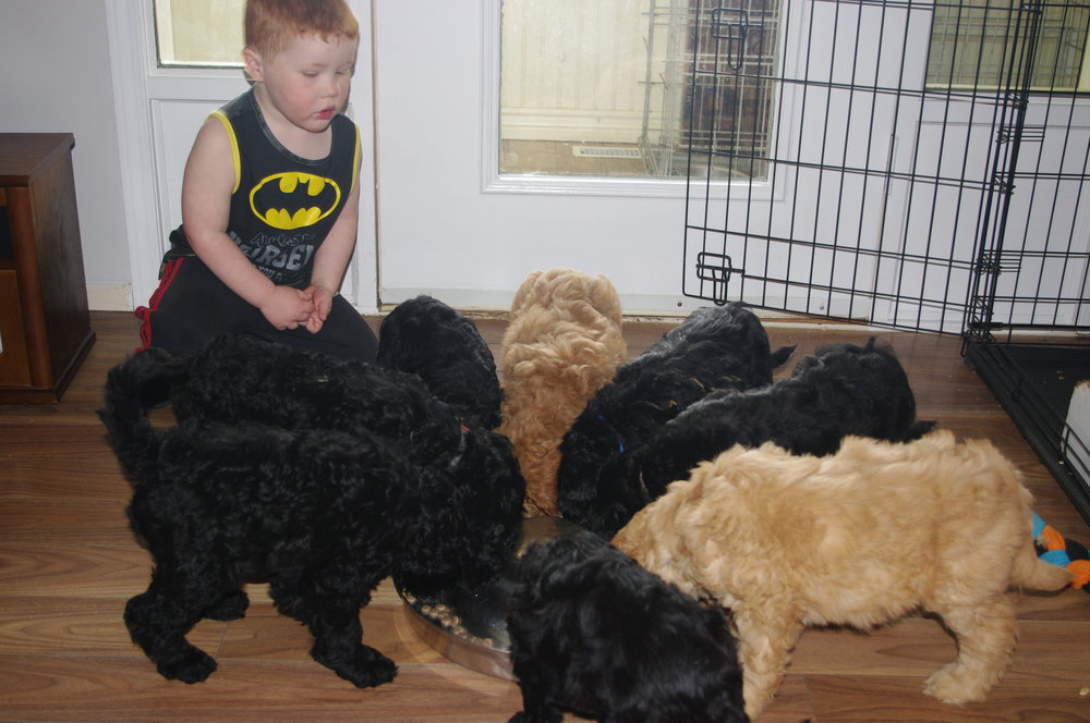 Little Batman feeds Cyra's puppies May 30.JPG